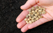 US Bill S 510 would outlaw gardening and saving seeds