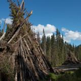 Trees slashed and burned for Northwest Transmission Line