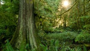 Logging BC's coastal treasures