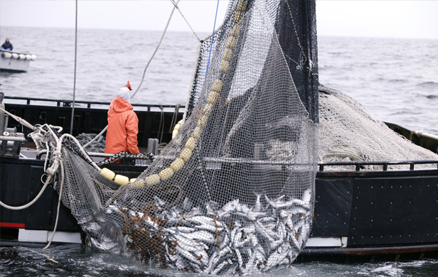 Despite Fukushima radiation, scientists say eating West Coast fish is safe