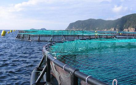 Cooke aquaculture-Belleoram, NL