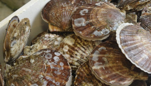 Nathan Cullen calls out Harper govt over climate change, dead scallops