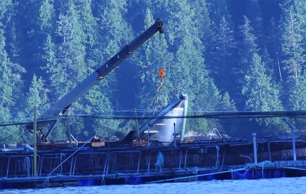 Morton looks for answers from Grieg over farmed salmon die-off