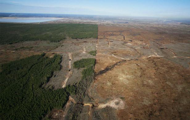 deforestation global