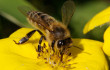 Ontario beekeepers sue pesticide makers for $450 million