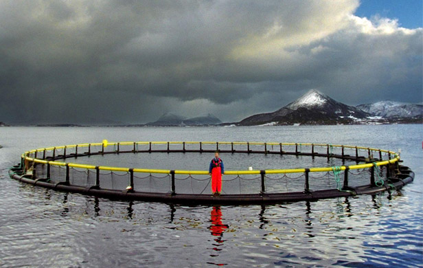 Salmon Farmers' ads more full of crap than seafloor beneath their pens