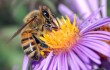 Suzuki- Bees matter, so restricting neonics is the right thing to do