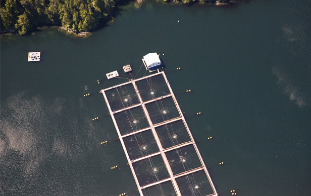 An existing BC salmon farm (Damien Gillis)