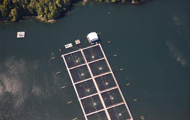 An existing BC salmon farm (Damien Gillis)
