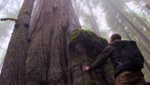 Tensions growing over plan to log Central Walbran Valley's ancient forests