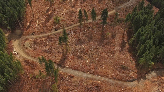 Nearby old-growth clearcuts