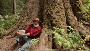 Craig Pettitt of Valhalla Wilderness Society in the Incomappleux Valley (Image: Damien Gillis)