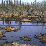 Oil-soaked marsh from Plains Mainstream spill (supplied photo)