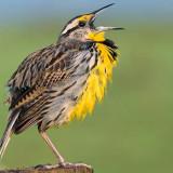State of World's Birds Bleak but not Hopeless
