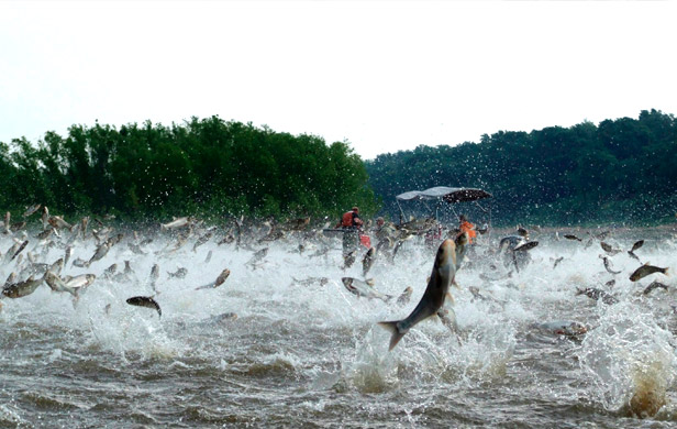 New plan expected for blocking Asian Carp invasion of Great Lakes