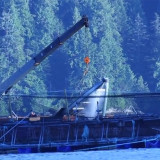 Morton seeks answers from Grieg over farmed salmon die-off