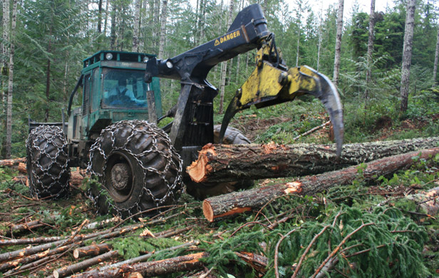 Fatal flaw in BC govt tree farm licence changes