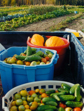 A sampling of the diverse produce grown at the Peterson market garden in the 1980s (photo: Larry Peterson)
