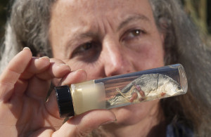Alexandra Morton displays pink salmon smolt with lice (Photo: Nick Didlick)