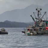 The untold story behind the herring fishery fiasco