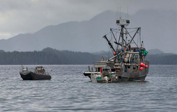 Herring gillnet boats outside Kitasu Bay just before giving up on this year's fishery (Tavish Campbell)
