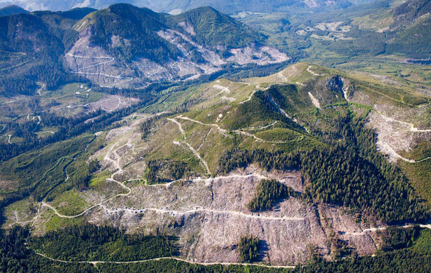 Clearcuts in the Klanawa Valley on Vancouver Island (Photo: TJ Watt)