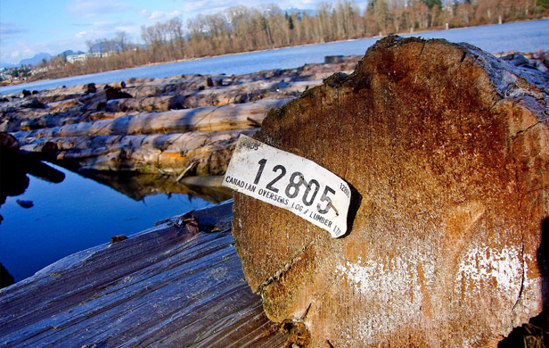 Raw Canadian logs for export (Paul Joseph/Flickr CC Licence)